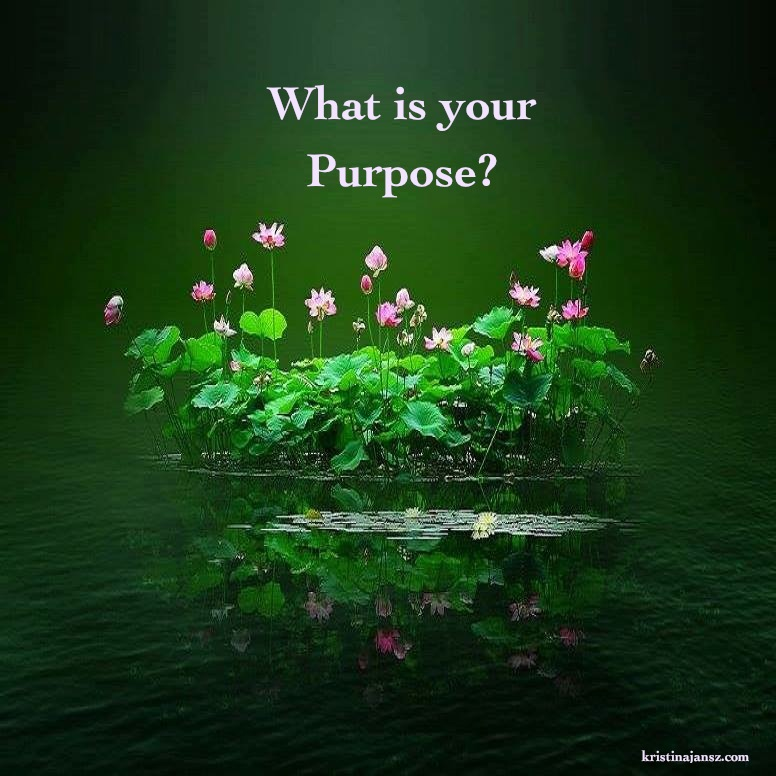 Lotus flowers. What is your Purpose?